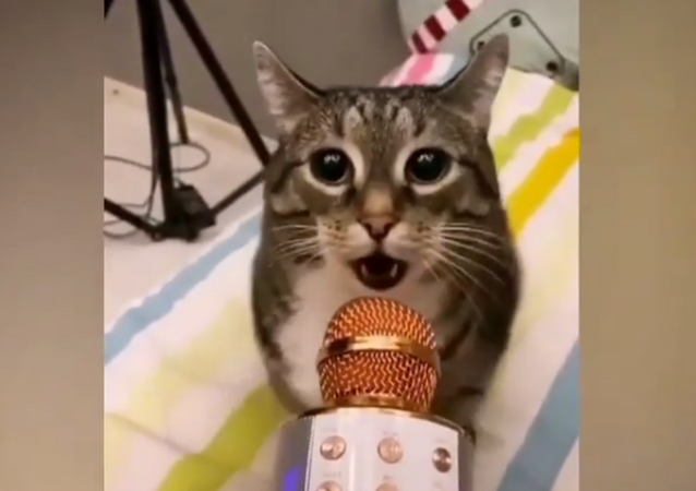 My Time to Shine: Cute Cat Shows Off Vocal Skills on Mic