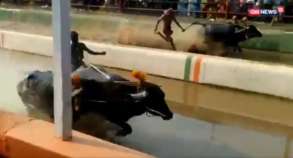 Srinivasa Gowda from Karnataka ran 100m in 9.55 seconds at a Kambala (buffalo race). He was faster than Usain Bolt who took 9.58 seconds to create a world record