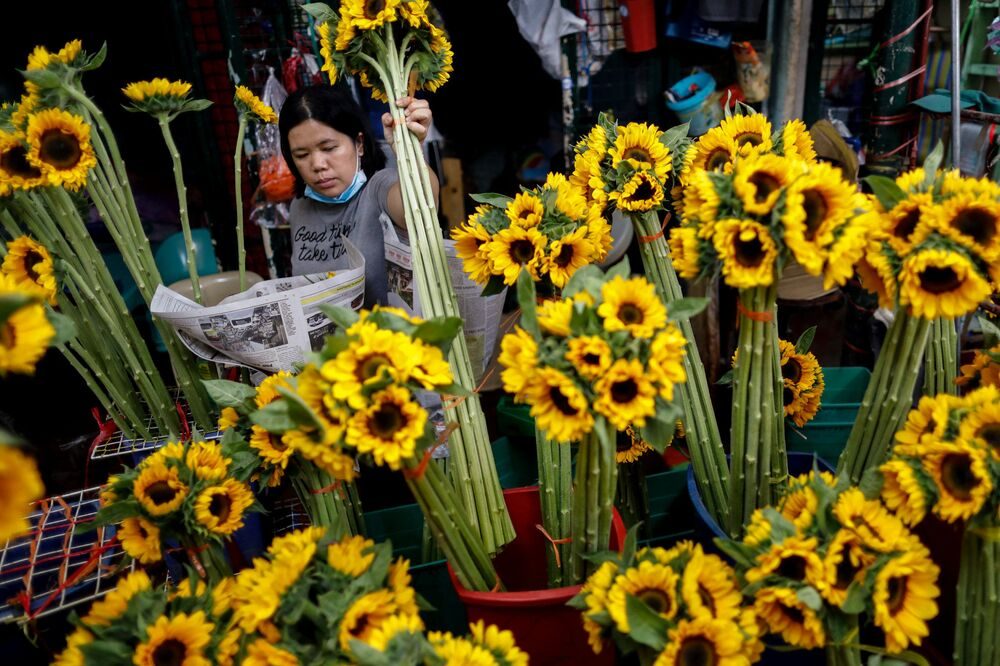 A vendor arranges sunflowers on Valentine's Day in Dangwa Flower Market in Manila, Philippines, February 14, 2020.