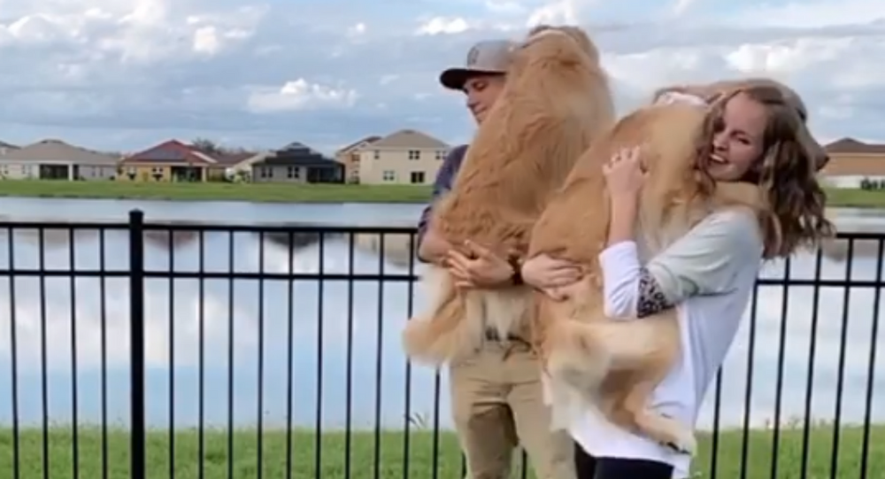 Life's Better in Pairs: Golden Retriever Duo Runs to Couple