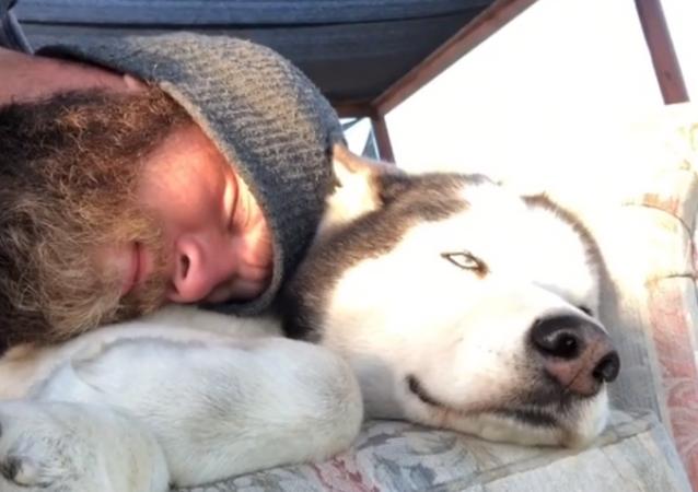 Let Me Sleep! Husky Opposes Cuddles