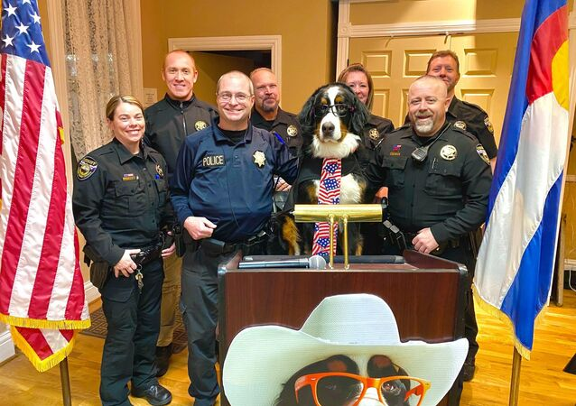 Parker the Snow Dog was officially sworn in as the Honorary Mayor of Visit Georgetown, Colorado February 18th ~ It was a packed house Tuesday Night at the Georgetown Community Center for Parker's Inauguration Ceremony