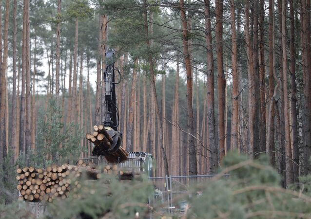 Pine logs are piled up on the future site where US electric car giant Tesla is set to build its new car factory, in Gruenheide near Berlin