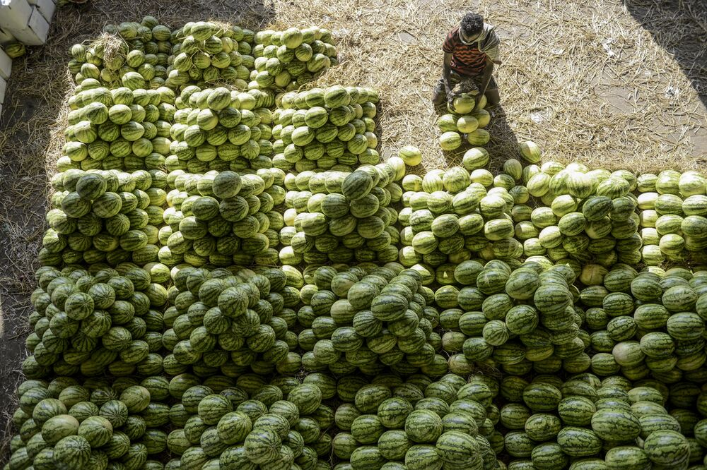 A labourer arranges watermelons before the auction at Gaddiannaram wholesale fruit market in Hyderabad on February 19, 2020.