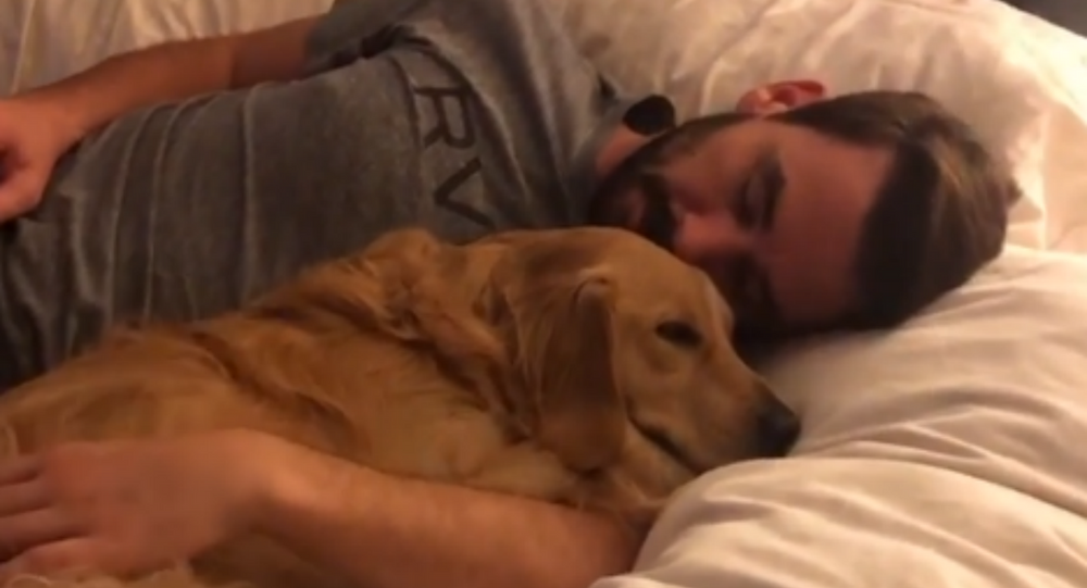 Snuggly Golden Retriever Pup Cozies Up With 'Dad'