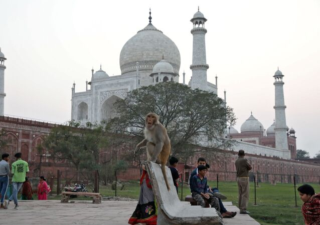 A monkey sits on a bench outside the historic Taj Mahal, where U.S. President Donald Trump and first lady Melania Trump are expected to visit, in Agra, India, February 23, 2020.