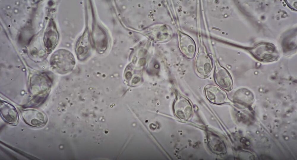 Marine biologists have discovered a living creature that does not need oxygen to survive, according to a new study published in the journal Proceedings of the National Academy of Sciences