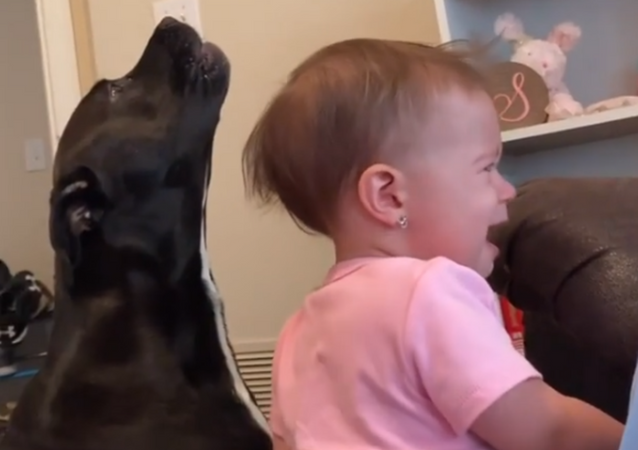 What About Us?! Dog, Baby Cry for Potato Chips