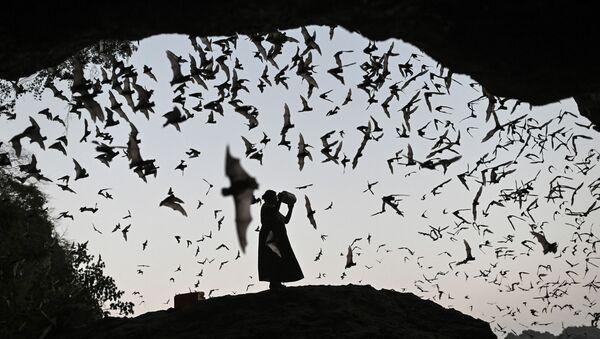 Женщина отпугивает летучих мышей от силовой башни в Хпа-Ан, Мьянма - Sputnik International