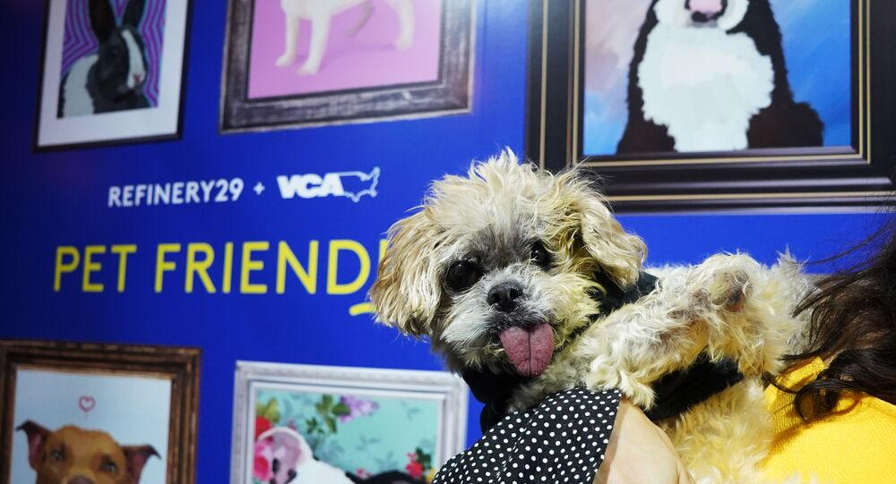 Marnie the Dog attends Refinery29 And VCA 'Pet Friendly' Series Premiere Party With Director Whitney Cummings At The Jefferson at The Jefferson on July 25, 2019 in Los Angeles, California