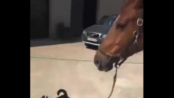 Horse and dog - Sputnik International