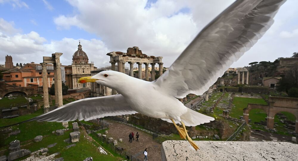 A seagull flies near the Ancient Forum in Rome in March 2020