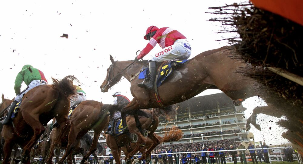 Eglantine Du Seuil ridden by Noel Fehily clears a fence on their way to victory in the National Hunt Breeders Mares' Novices' Hurdle event during the 2019 Cheltenham Festival at Cheltenham, England, Thursday March 14, 2019.