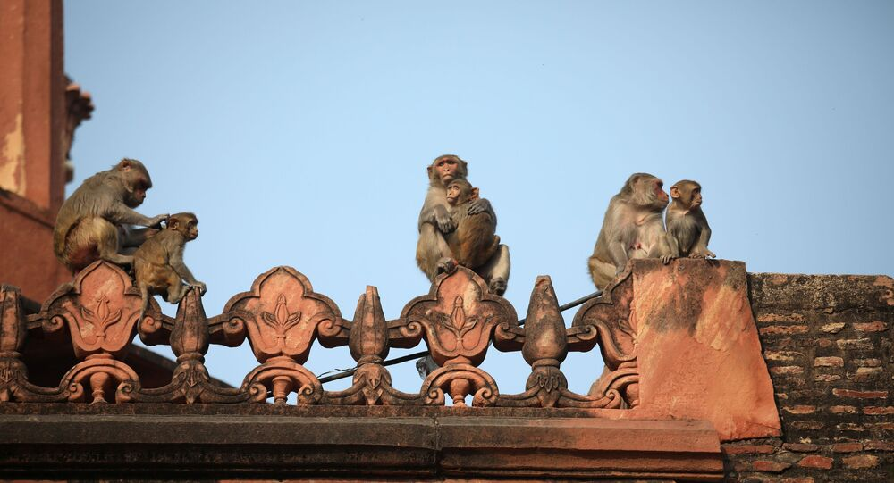 Monkeys rest on a boundary wall of the historic Taj Mahal, where U.S. President Donald Trump and first lady Melania Trump are scheduled to visit, in Agra, India, February 24, 2020.