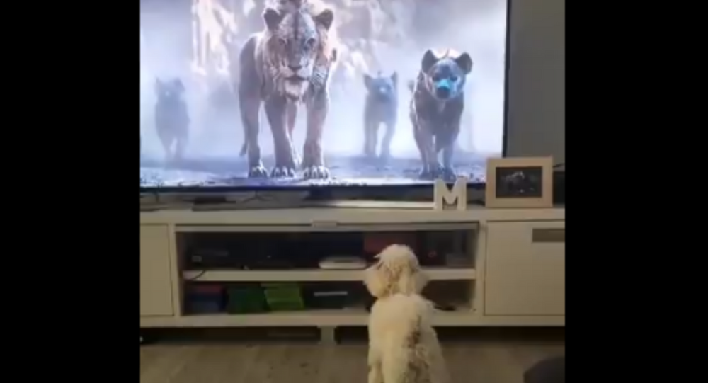 Be Prepared! Cute Doggo Spooked by Kids' Movie
