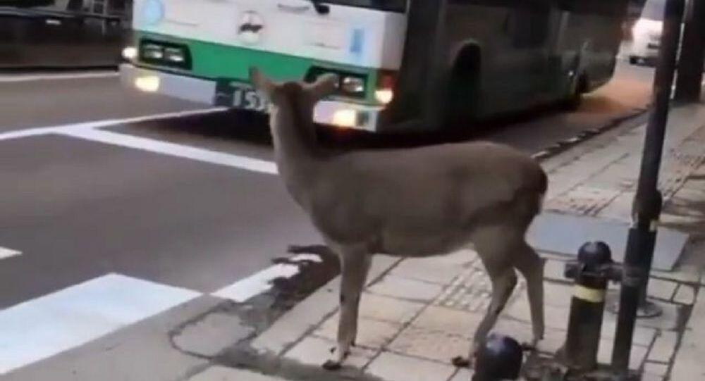Crossing the streets of Nara Japan
