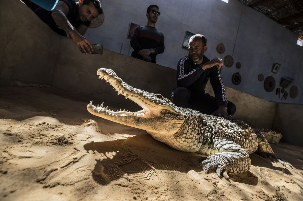 Give Me a Smile, Crocodile: Reptiles From Egyptian Village Live Side by Side With People
