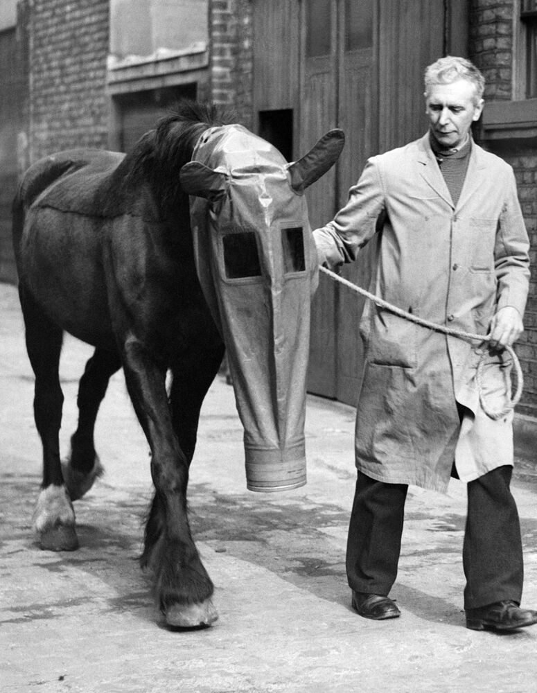 A horse equipped with a gas mask as a precaution against gas attacks. London, 27 March 1940