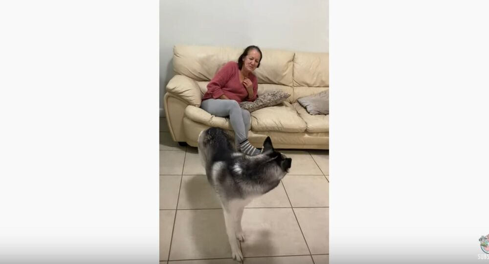 Germaphobic Husky Social Distances From Grandma