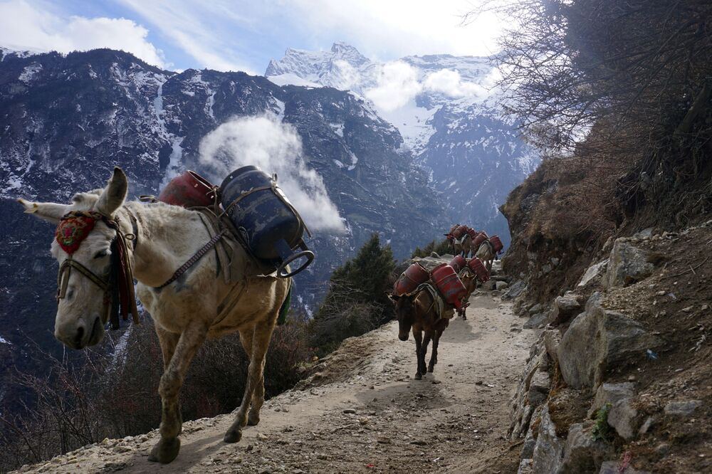 Mules carry empty gas cylinders along a path during the first day of government-imposed natiowide lockdown as a preventive measure against the COVID-19 coronavirus, near Namche Bazar, in the Everest region on March 24, 2020.