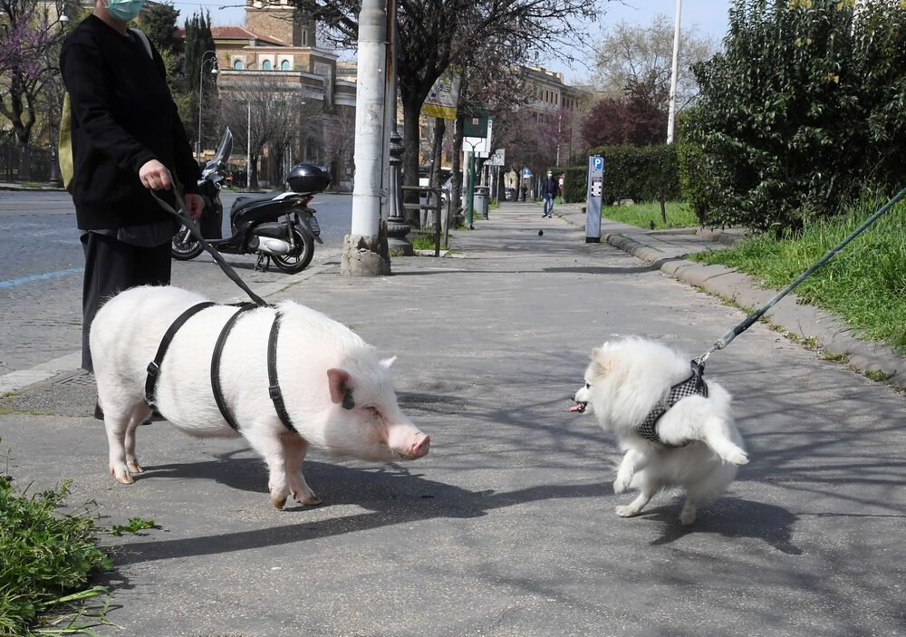 A woman wearing a protective face mask walks her pig named Dior, following the outbreak of the coronavirus disease (COVID-19), in Testaccio district, in Rome, Italy March 21, 2020.
