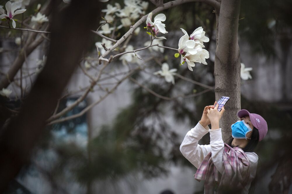 A woman wearing a face mask takes a photo of blossoms at the Beijing Zoo after it reopened its outdoor exhibit areas to the public since they were closed during the coronavirus outbreak in Beijing, Tuesday, March 24, 2020. The Chinese government is pushing efforts to kick-start the world's second-largest economy and put money in the pockets of workers who have gone weeks without salaries. While most of Beijing's world-famous tourist sites remain closed, the city zoo and parts of the Great Wall are again accepting visitors by appointment, and some restaurants were reopening for business on the condition that customers do not sit facing each other.