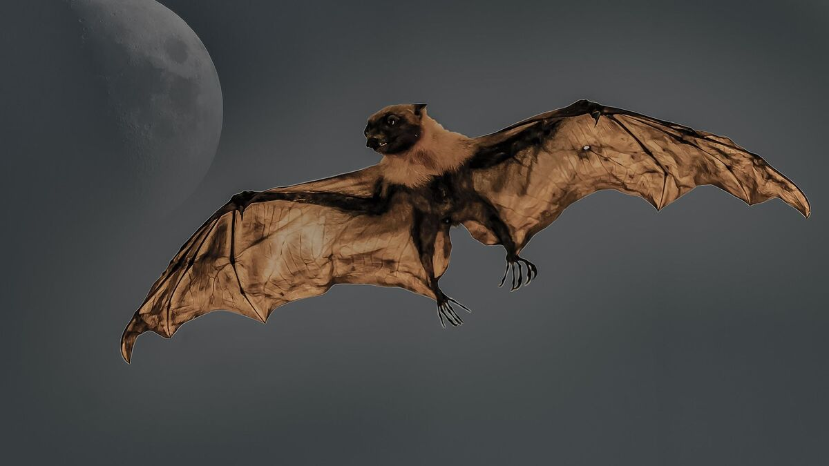 Doomsday Warning? Hundreds of Bats Mysteriously Dropping Dead in ...