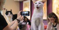 Online conference Kitties Against Coronavirus in Saint Petersburg, Russia.