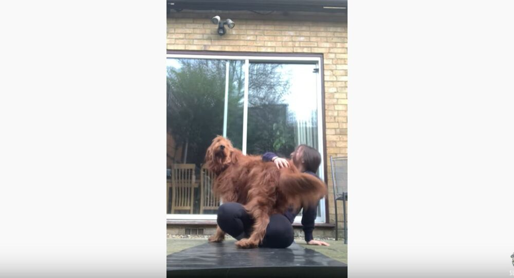 Adorable Pup Interrupts Quarantine Yoga Routine