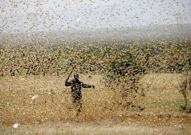 A man attempts to fend-off a swarm of desert locusts at a ranch near the town of Nanyuki in Laikipia county, Kenya, February 21, 2020