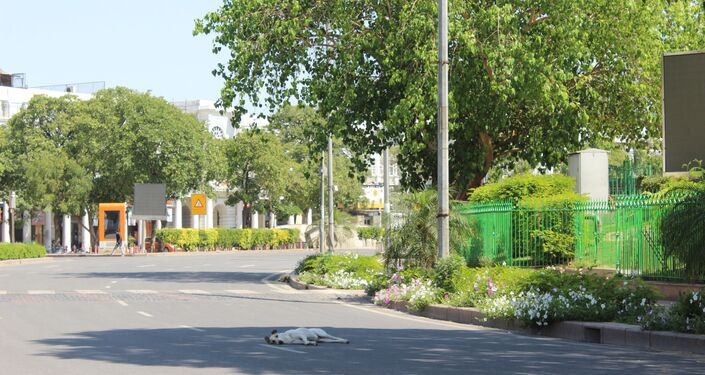 A lone dog in the centre of a normally busy road in the inner circle of Rajiv Chowk, Delhi.