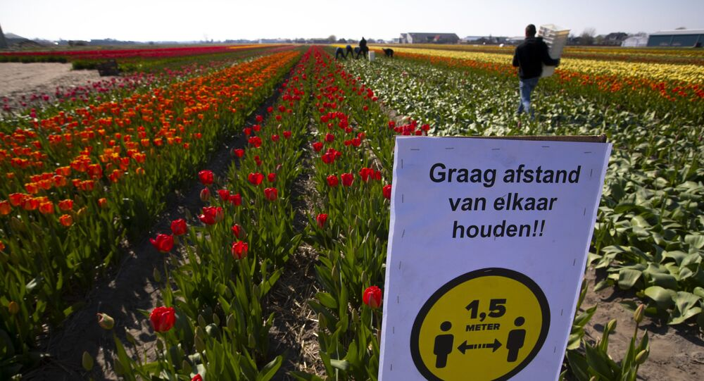 A sign asking people to observe social distancing and keep 1.5 meters, or five feet, apart to reduce the spread of the coronavirus was put up in a field of tulips in Lisse, Netherlands, Thursday, March 26, 2020