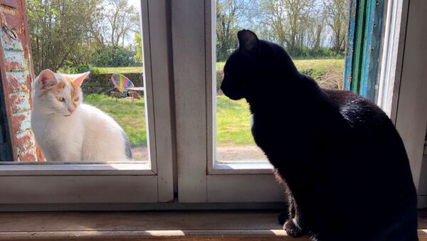 A domestic black cat looks at a cat sitting outside the window, in the village of Blecourt during a lockdown imposed to slow the spreading of the coronavirus disease (COVID-19) in France, 29 March 2020. - Sputnik International