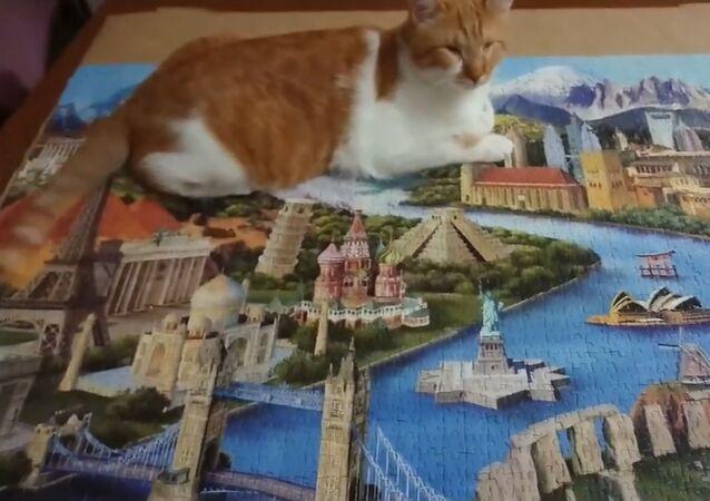 Blind Cat Completes Complex Puzzle