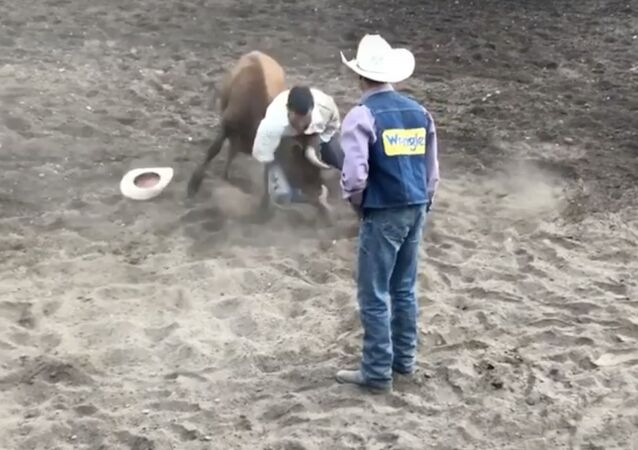 Screenshot of the video of Luke Rockhold fighting a bull in a rodeo, 22 April 2020