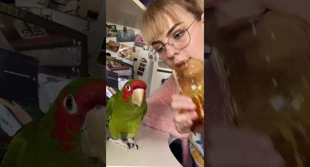 Girl and Parrot Play by Yelling into Glass