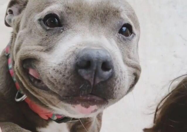 Staying Pawsitive: Sweet Doggo Smiles Away Amid Pandemic