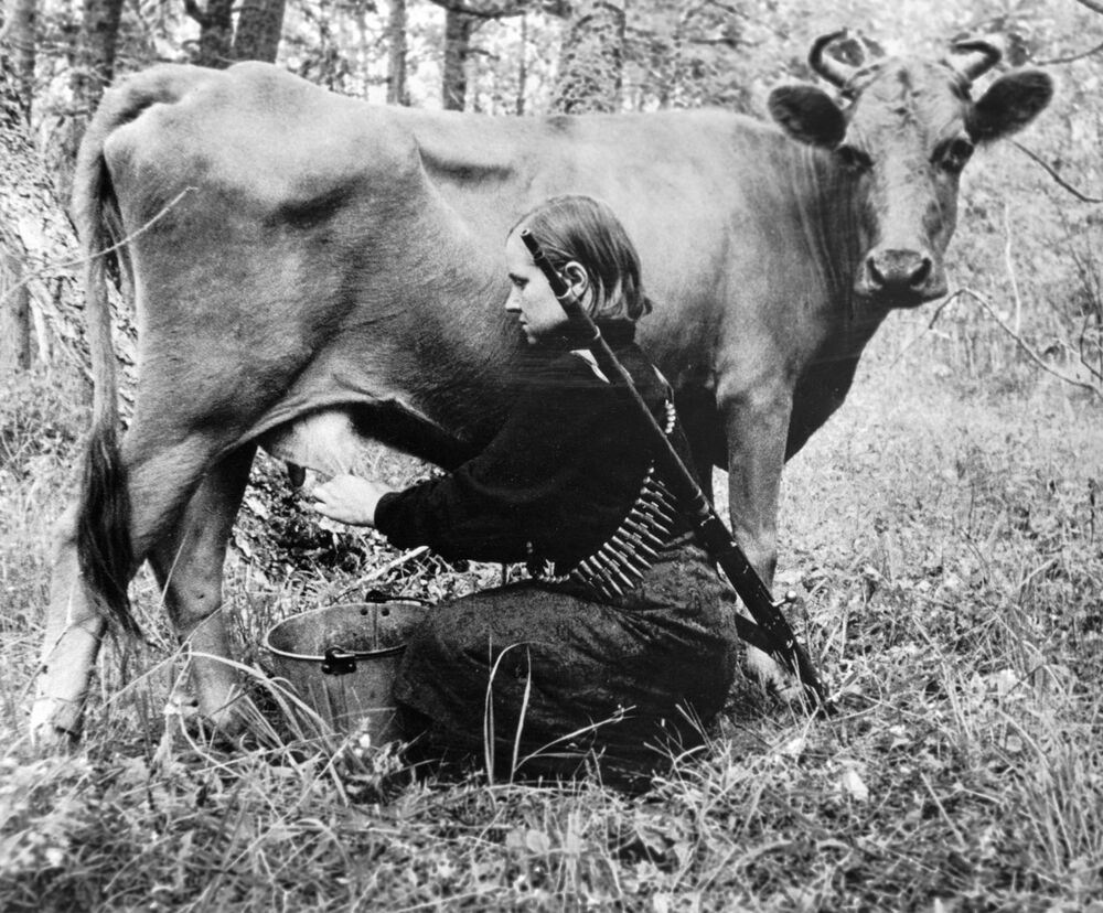 A woman milks a cow in a partisan regiment in Ukraine on 31 July 1943
