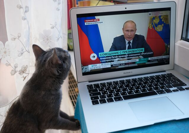 Cat looks on as Russian President Vladimir Putin takes part in briefing on the coronavirus situation, May 11, 2020.