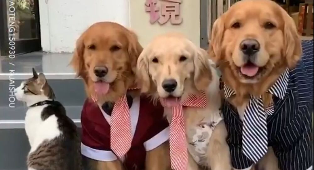 Lay Off Pops: Golden Retriever Makes Uncooperative Cat Pose for Family Photo