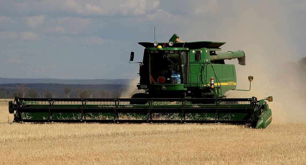 This photo taken 12 November, 2007 shows a dry and stunted barley crop being harvested on the property of farmer Paul Rout at Grenfell in the central west of New South Wales.