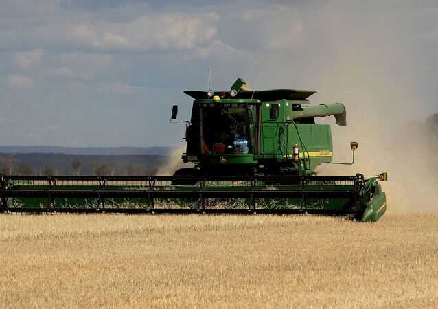 This photo, taken 12 November 2007 shows a dry and stunted barley crop being harvested on the property of farmer Paul Rout at Grenfell in the central west of New South Wales.
