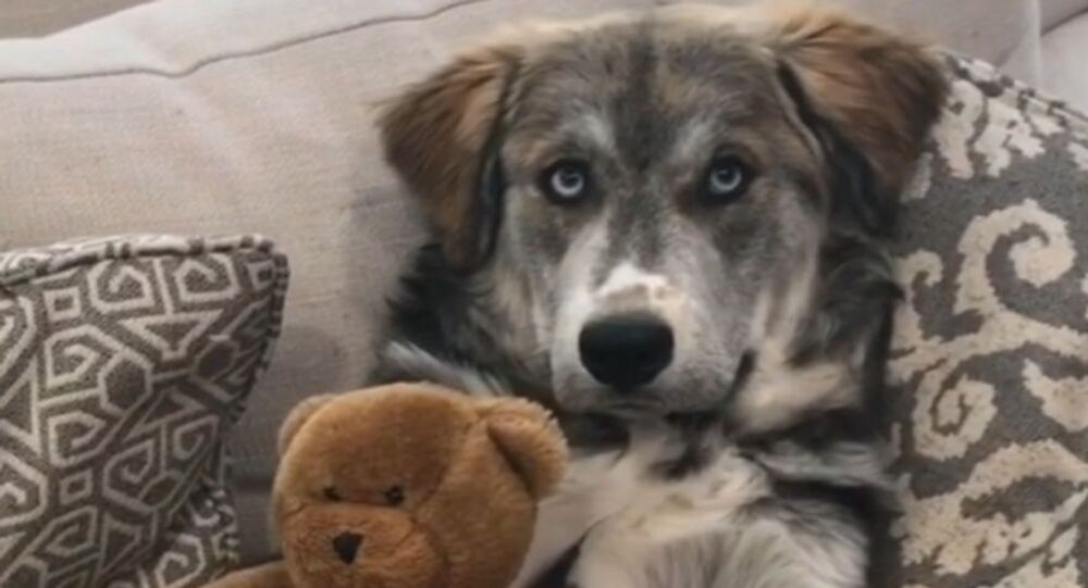 'Who's Your Best Friend?': Cute Pup Shows Off His Best Pal