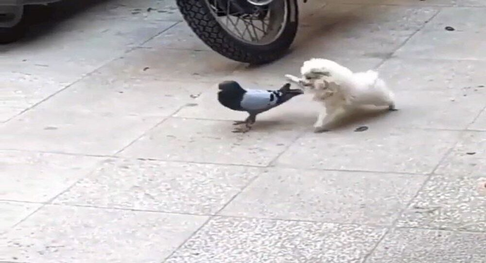 Dog and pigeon