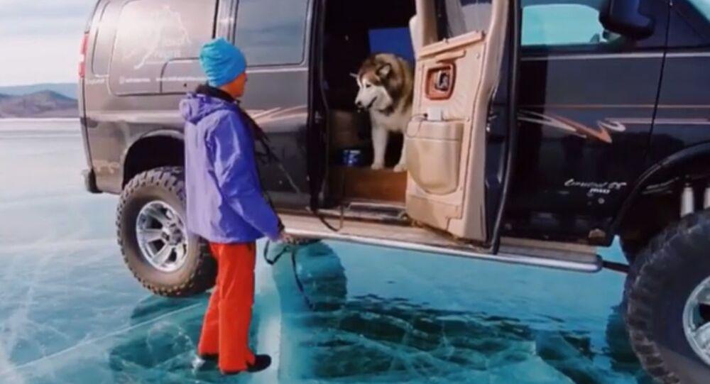Cute Yet Strange: Malamute Scared of Ice in Russia