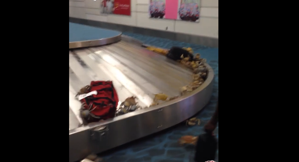 Crabs in Airport