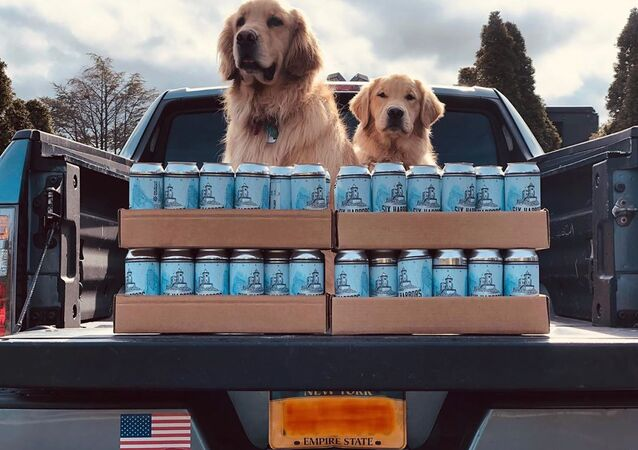 Golden retrievers Buddy and Barley from Six Harbors Brewing Company