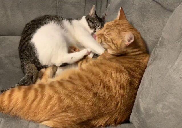 Kitty Doesn't Feel Like Cuddling