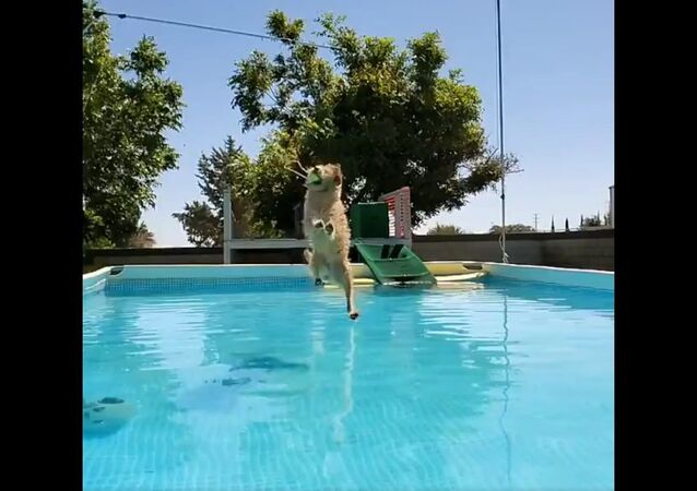 Perfect ... AMAZING leap !!