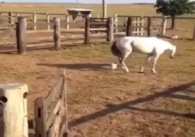 A horse and a rooster
